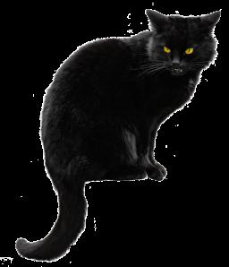 black cate