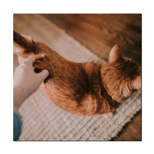 cat bum