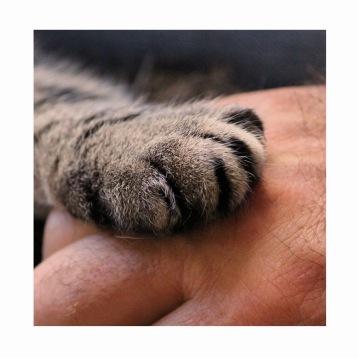 cat paw 2